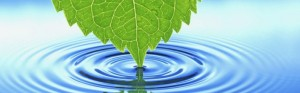 cropped-leaf-water-desktop-background.jpg