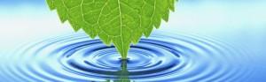 cropped-leaf-water-desktop-background.jpg