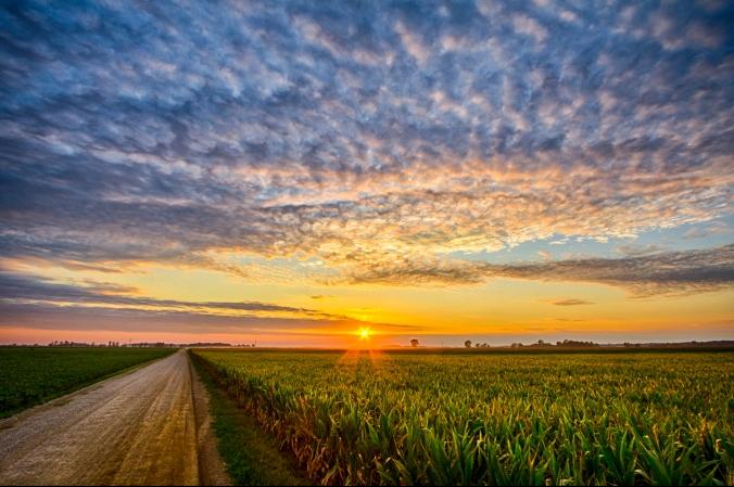 midwest cornfield